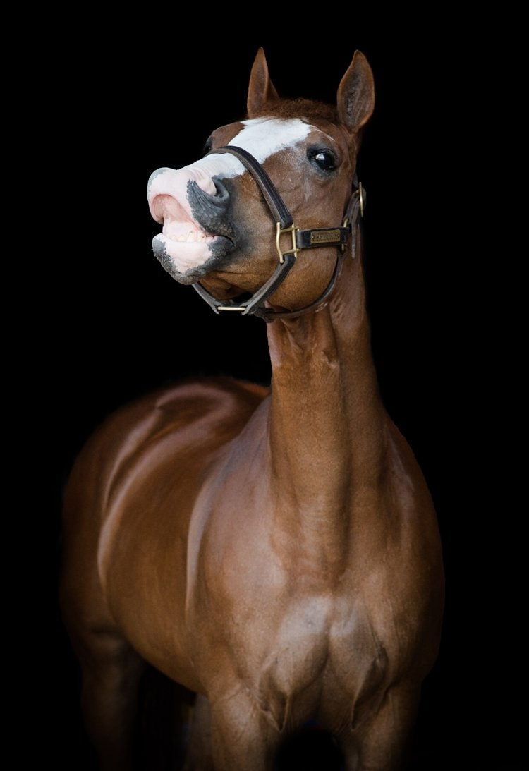 kirstie-marie-jones-and-a-subtle-impulse-sudsy-aqha-apha-elite-show-horses-james-saubolle-by-kirstie-marie-photography_0004