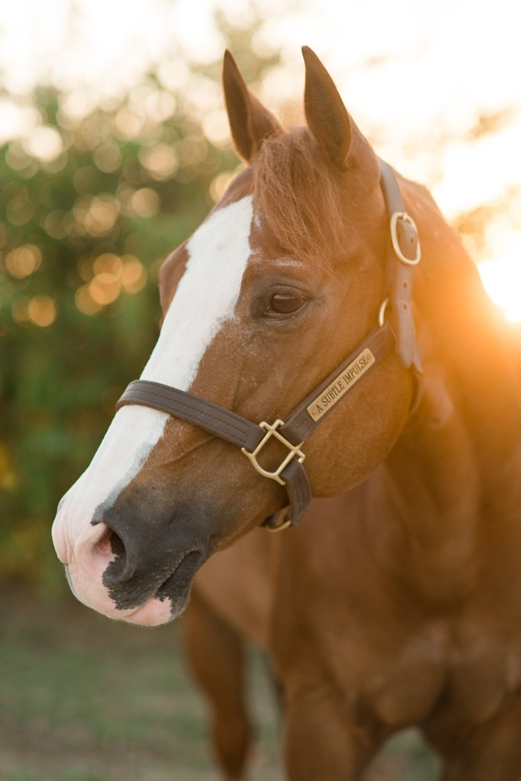 kirstie-marie-jones-and-a-subtle-impulse-sudsy-aqha-apha-elite-show-horses-james-saubolle-by-kirstie-marie-photography_0011