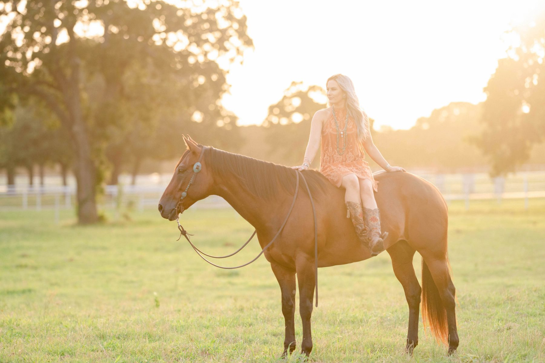 Equine Photography Online Courses